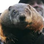Punxsutawney Phil sees his shadow and wants more time!